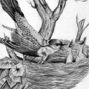 Birds-and-the-nest