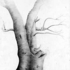 Nature-Life-Tree