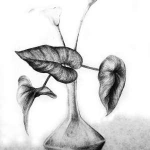 Nature-life-2